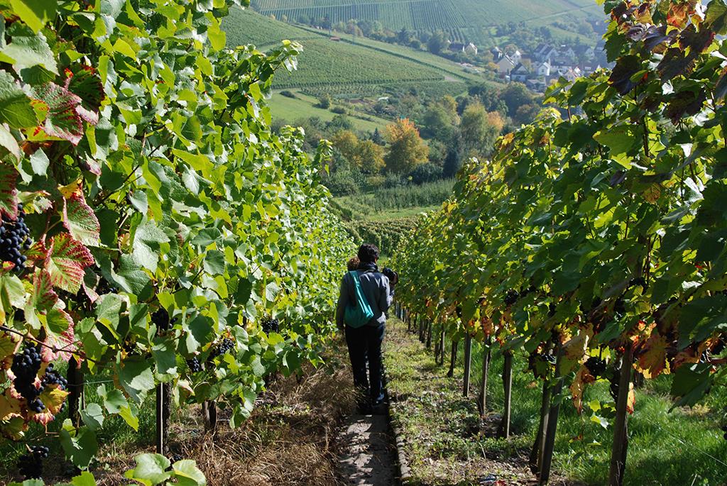 Weinwanderweg in Stuttgart
