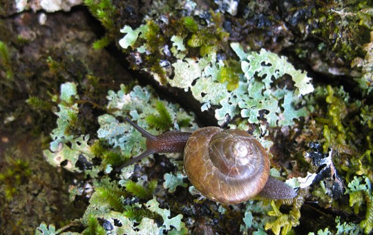 Hiking a Snail's Pace