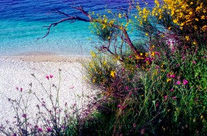 A beach in Corfu