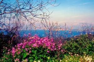 Spring blooms in Corfu